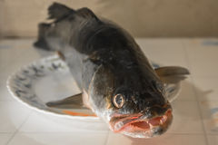 Big toothy whole fish on a platter Stock Photography