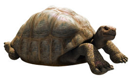Big tortoise Royalty Free Stock Photography