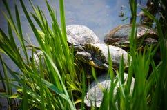 Big tortoise Royalty Free Stock Photography