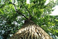 Big tree Stock Photos
