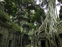 Big Tree Stock Images