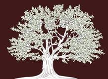 Big tree. Vector illustration of old tree in graphical style vector illustration