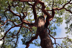 The big tree Stock Photo