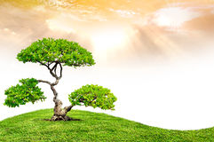 The big tree. And green grass Royalty Free Stock Photography