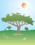 Big Tree. A illustration of a big tree in the wood Stock Illustration
