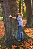 Big tree. Young boy and big tree Stock Images
