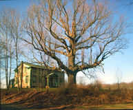 Big Tree. In front of an old house. Late autumn shot royalty free stock images