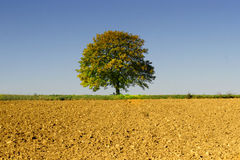 Big tree on the acre Royalty Free Stock Images