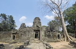 Big tree on ancient Angkor ruin Temple - Siem Reap, Cambodia. Asia Royalty Free Stock Image