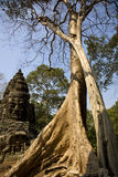Big tree in Angkor Wat Stock Photo