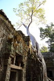 Big Tree At Angkor Wat Stock Photo