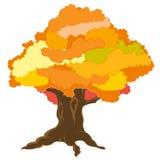 Big tree by autumn Stock Image