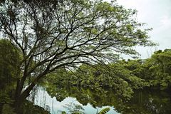 Big tree on the bank of the river Royalty Free Stock Photos
