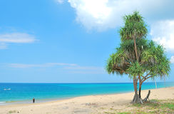 Big tree on the beach Stock Image