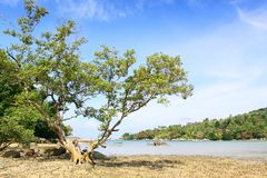 Big tree on the beach Stock Photography