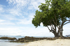 Big tree on the beach. Composition of seascape as sea, beach, sand, big tree and submerged rocks Stock Photography