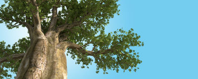 BIG TREE Royalty Free Stock Photography