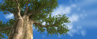 BIG TREE Stock Photography