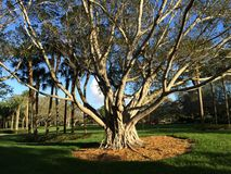 Family tree. Beautiful tree in the middle of the park royalty free stock photo