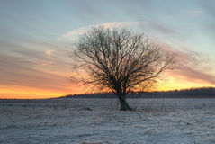 Single tree silhouette sunrise Royalty Free Stock Photos