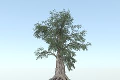 BIG TREE. In blue background - 3D Stock Images