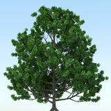 BIG TREE. In blue background - 3D Royalty Free Stock Images