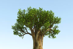 BIG TREE. In blue background - 3D Royalty Free Stock Photo
