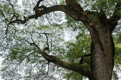 Big tree border background Royalty Free Stock Images