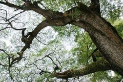 Big tree border background Stock Photography