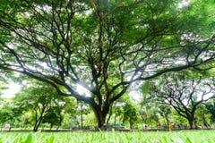 Big tree branch Stock Photo
