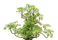 Big tree branch Stock Photos