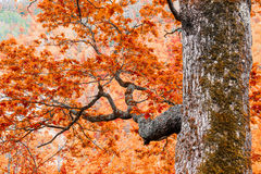 Big tree with branches Stock Images