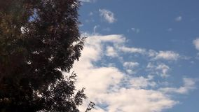 Big tree branches and leaves blowing in the wind. Over blue sky clouds background stock video
