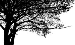 Big tree and branches silhouette. Detailed vector Royalty Free Stock Photos