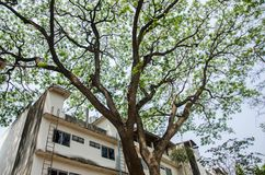 Big tree and building royalty free stock images