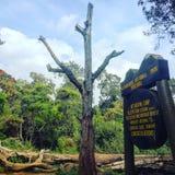Big tree camp Kilimanjaro stock images