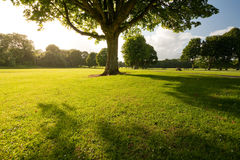 Big tree in the centre of park. Sunny park photo taken in Bute Park in Cardiff, UK royalty free stock photos
