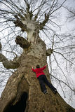 A big tree climbing child stock photography