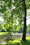 Big tree close to stream. Large tree filter sunlight in a park where a stream flows Royalty Free Stock Photo