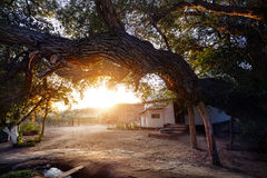 Big tree and country house Stock Images