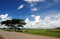 Big tree beside country road. Royalty Free Stock Photography