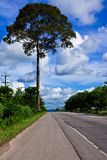 Big tree beside country road in Thailand Royalty Free Stock Photography