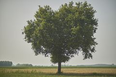 The big tree in the countryside Royalty Free Stock Photos