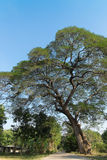Big tree in countryside. With peaceful scenic Stock Images