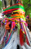 Big tree covered by powder and tied with multicolor fabrics, faith of thai people Royalty Free Stock Images