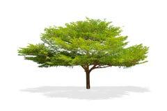 Beautiful green tree cut isolated