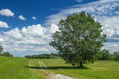 Big tree with dense crown. Massive tree with dense, green crown and tiny human figure aside. Beautiful atmosphere with white clouds on blue sky in the background royalty free stock photography