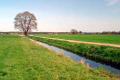 Big tree by a ditch in the fields. A ditch for agriculture fields on a sunny day in Germany Stock Photography
