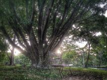 Big tree. Dream picture big tree with chair Stock Photography