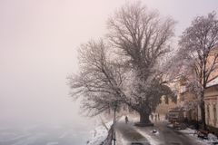 Big tree on embankment in fog and hoarfrost. Big tree on embankment inf fog and hoarfrost. beautiful winter cityscape near the frozen river in the morning Royalty Free Stock Photo